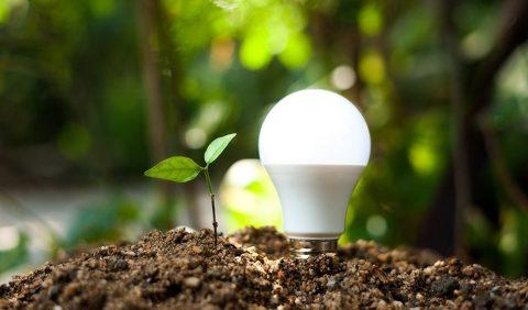 Bulb energy ImageForArticle 8361